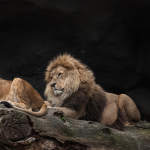The Lion And The Fox As Types Of Human Behavior